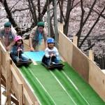 相模原市民桜祭り2