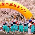 相模原市民桜祭り1