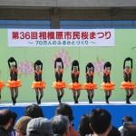 相模原市民桜祭り3