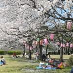 おおさわ桜祭り3