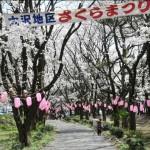 おおさわ桜祭り1