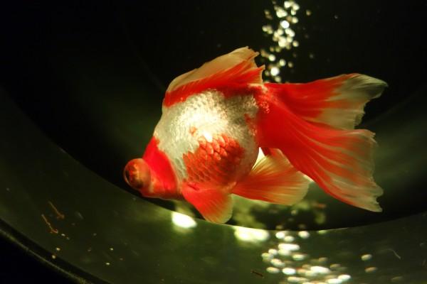 art aquarium03