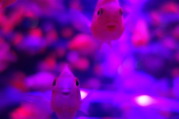 art aquarium04