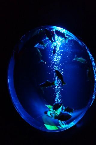 art aquarium05