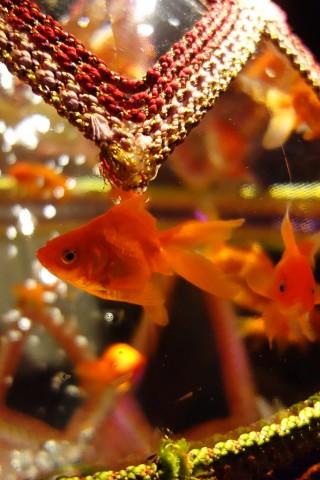 art aquarium08