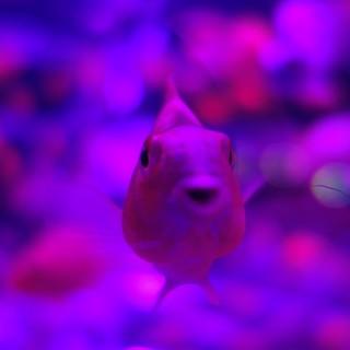 art aquarium11
