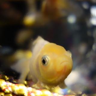 art aquarium12